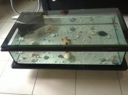 Table Verre En De Basse Idée Déco Aquarium Maison Et WYeE29HDI