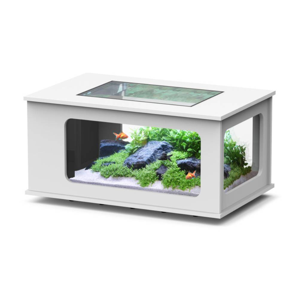 Table basse aquarium eau douce